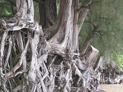 Photograph - Kauai - Roots by HEVi FineArt