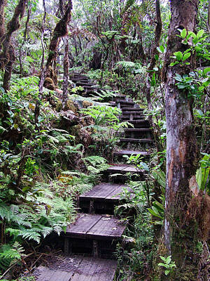 Photograph - Kauai Stairway by Ken Smith