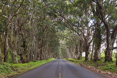 Photograph - Kauai Tree Tunnel Road by Michael Yeager