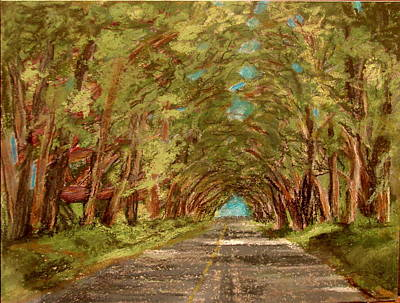 Kauiai Tunnel Of Trees Art Print