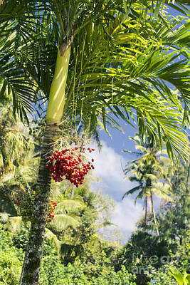 Photograph - Keanae Palm Beauty Maui Hawaii by Sharon Mau
