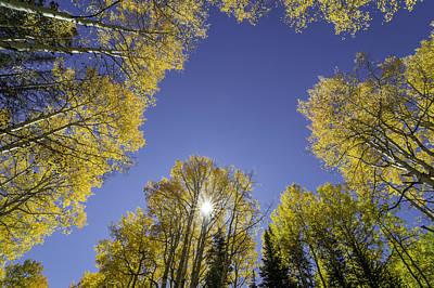 Aspen Trees Photograph - Kebler Pass Aspens by Michael J Bauer