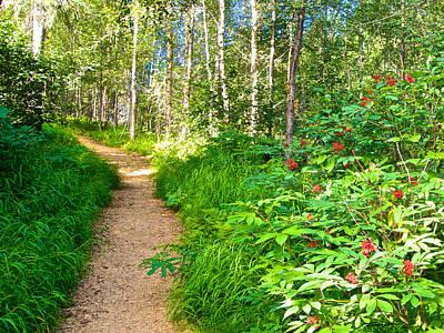 Keen-eye Nature Trail In Kenai National Wildlife Refuge In Soldotna-ak Art Print