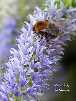 Photograph - Keep Busy - Bee Happy 2 by Gill Billington