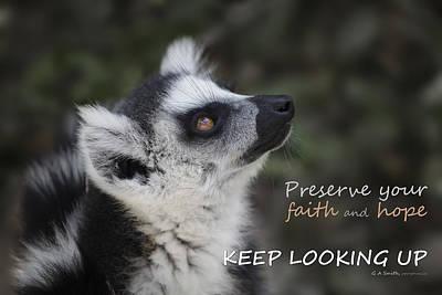 Lemur Photograph - Keep Looking Up by Liz Leyden