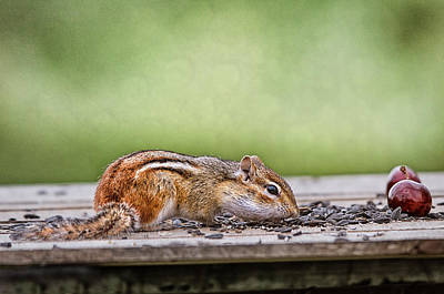 Chipmunk Photograph - Keep Your Eyes On The Prize by Susan Capuano