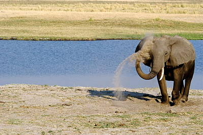 Keeping Cool Original