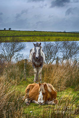 Bodmin Photograph - Keeping Watch by Chris Thaxter