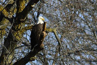 Photograph - Keeping Watch by Bonfire Photography