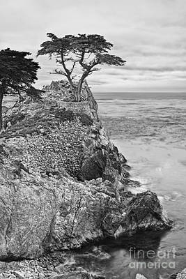 Lone Cypress Photograph - Keeping Watch - Famous Lone Cypress Tree At Pebble Beach In Monterey California In Black And White by Jamie Pham