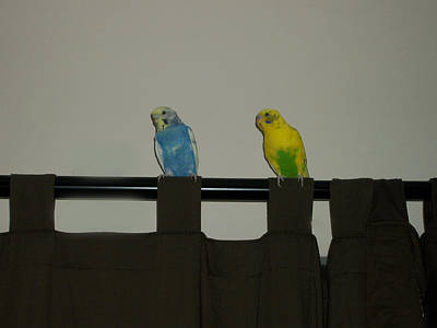 Photograph - Keets On Curtain Rod. by Photo Shirts