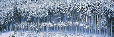 Snow Covered Trees Photograph - Keihoku-cho Kyoto Japan by Panoramic Images