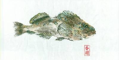 Kelp Greenling Gyotaku Art Print by Julia Tinker