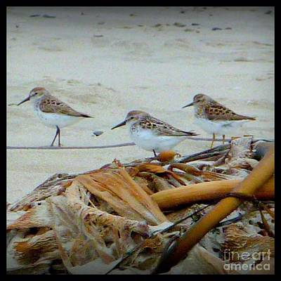 Photograph - Kelp Standing Visitors by Susan Garren