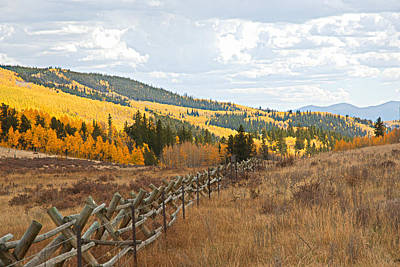 Photograph - Kenosha Pass Aspens 5 by Robert Meyers-Lussier