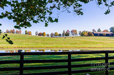 Photograph - Kentucky Horse Farm by Mary Carol Story