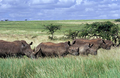 African Resort Photograph - Kenya Africa Lewa Downs Herd Of White by Vintage Images
