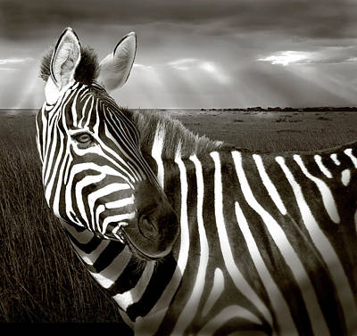 Manipulation Photograph - Kenya Black & White Of Zebra And Plain by Jaynes Gallery