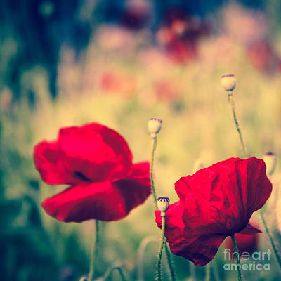 Keokea Poppy Dreams Art Print by Sharon Mau