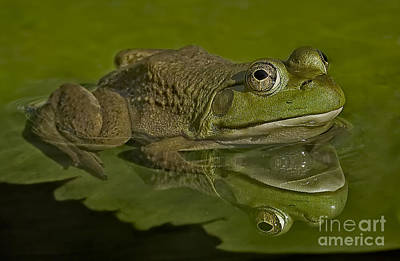 Bull Frog Photograph - Kermit by Susan Candelario