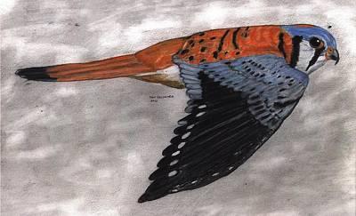 North American Wildlife Drawing - Kestrel by Don  Gallacher