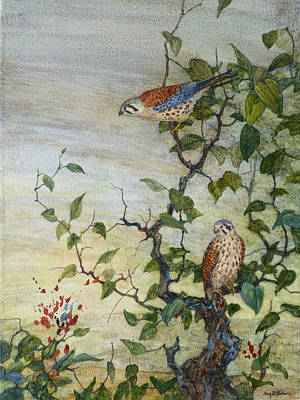 Wall Art - Painting - Kestrel Pair by Floy Zittin