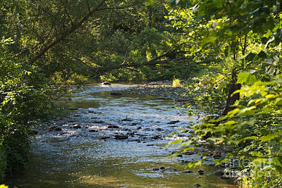 Photograph - Keuka Outlet Creek by William Norton