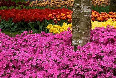 Photograph - Keukenhof Floral Strata by David Beebe