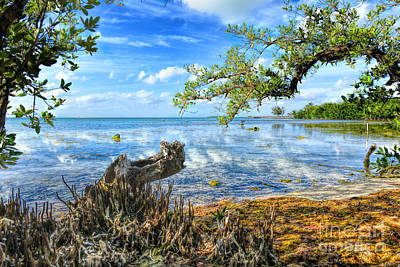 Photograph - Key Largo  by Olga Hamilton