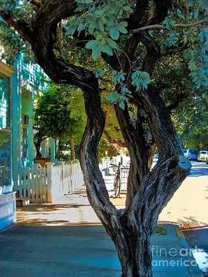 Key West Beauty Art Print by Claudette Bujold-Poirier