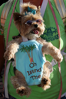 Photograph - Key West Dog by Bob Slitzan