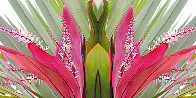 Photograph - Key West Symmetry by Simply  Photos
