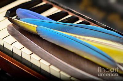 Keyboard Photograph - Keyboard Feathers Ivory - Feathering The Keys by Wayne Nielsen