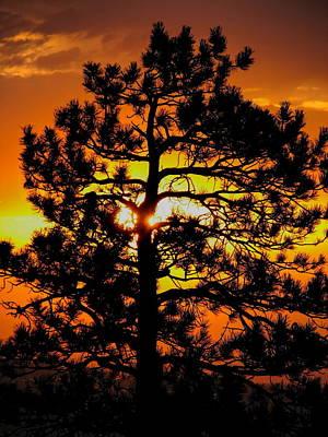 Photograph - Keystone Pine by Dale Kauzlaric