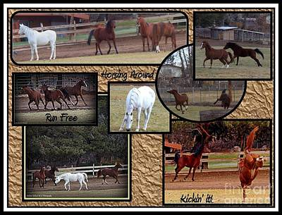 Photograph - Horses Kickin It  by Bobbee Rickard