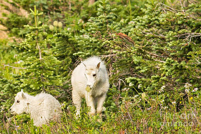 Kids In Glacier Np 3 Art Print by Natural Focal Point Photography