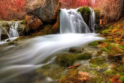 Moody Trees - Kiesel Falls by David Andersen