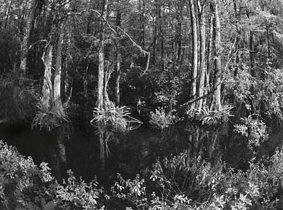 Kiev Swamp Art Print