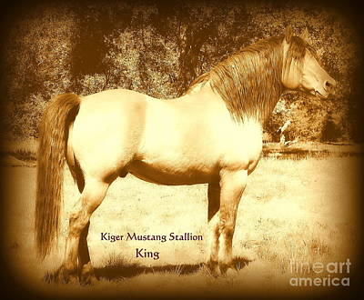Kiger Mustang Stallion King Sepia Art Print by Jodie  Scheller