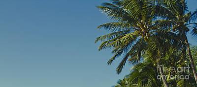 Photograph - Kihei Coconut Palms by Sharon Mau