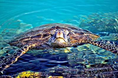 Kiholo Turtle Print by Bob Kinnison