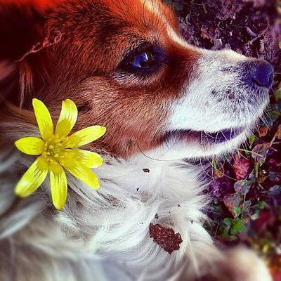 Pet Photograph - Kiki And The Spring! by Emanuela Carratoni