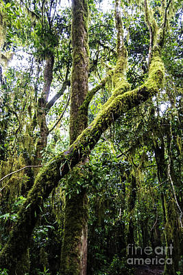 Africa Photograph - Kilimanjaro Rainforest I by Scotts Scapes