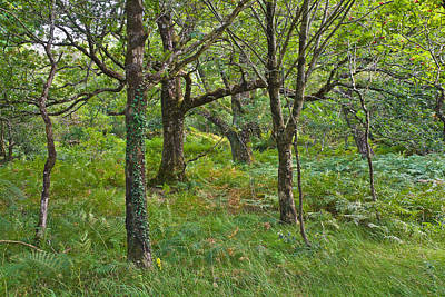 Photograph - Killarney Woodland by Jane McIlroy