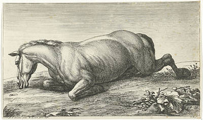 Work On Paper Drawing - Killed Horse On The Belly Lying, Jan Van Huchtenburg by Quint Lox