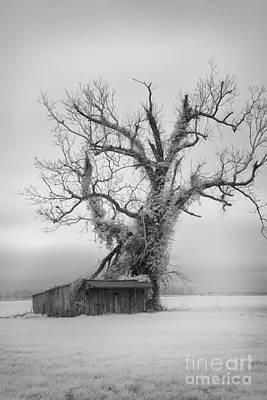 Pamlico Sound Photograph - Killer Tree - Outer Banks by Dan Carmichael