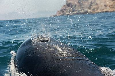 Killer Whale Photograph - Killer Whale Blowhole by Christopher Swann