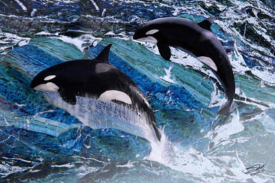 Painting - Wild Orca Whales Of Florida by IM Spadecaller