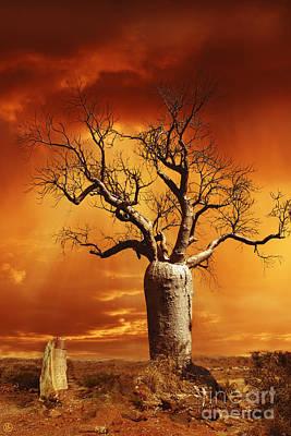Baobab Photograph - Kimberley Dreaming by Linda Lees