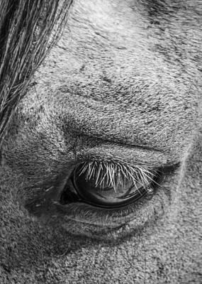 Photograph - Kind Eye by Dianne Arrigoni